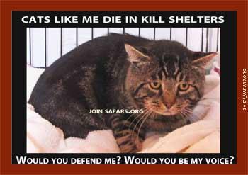i kill that cat